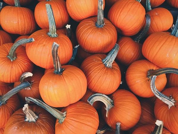 photo de courges à l'automne
