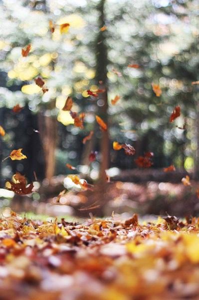 Feuilles tombant d'un arbre en automne