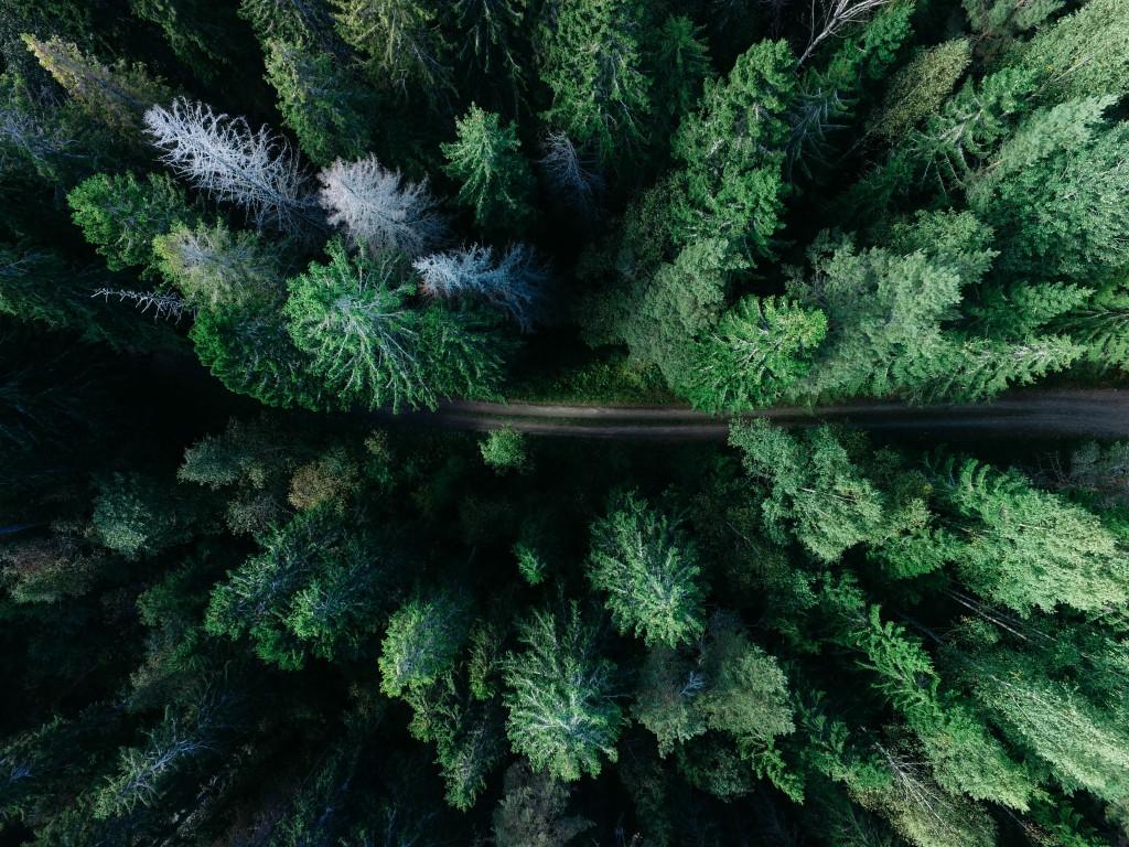 Photographie aérienne d'un chemin dans une forêt