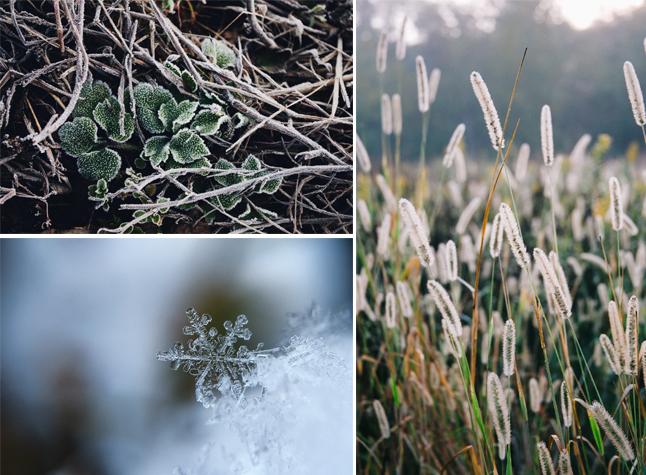Photographier le givre en hiver